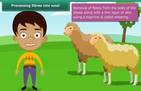 Fibre to Fabric-Wool: Processing Fibres into Wool