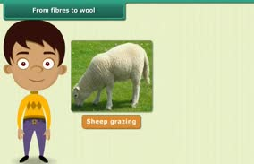 Fibre to fabric-Wool: From Fibres to Wool