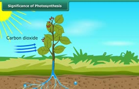 Nutrition In Plants Significance Of Photosynthesis Flexiguru Com