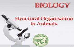 Structural Organisation In Animals: Assessment