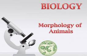 Morphology of Animals: Assessment